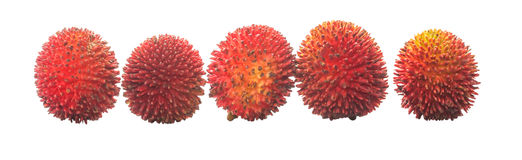 Pulasan Fruit or Nephelium Mutabile V Stock Images