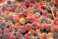 Pulasan fruits Stock Image