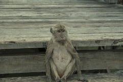 Pulau Rinca - Parc εθνικό Komodo - πίθηκος στοκ φωτογραφίες με δικαίωμα ελεύθερης χρήσης