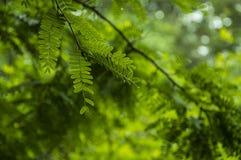 Pulau Rinca - Parc εθνικό Komodo - φύση στοκ φωτογραφίες με δικαίωμα ελεύθερης χρήσης