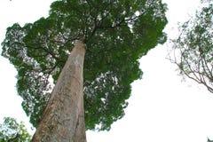Pulau Ubin Royalty Free Stock Photos