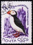 Pulcinella di mare dell'uccello - arctica del Fratercula, circa 1976 Fotografia Stock Libera da Diritti
