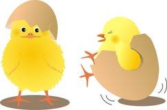 Pulcini con le uova Immagine Stock
