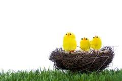 Pulcini del bambino che si siedono nel nido Fotografie Stock