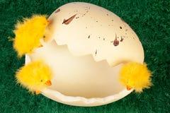 Pulcini di Pasqua su un guscio d'uovo rotto Fotografie Stock