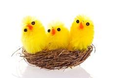 Pulcini di Pasqua in un nido su priorità bassa bianca Immagine Stock
