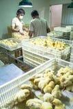 Pulcini in un'incubatrice Fotografia Stock