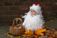 Pulcino del bambino Fotografie Stock