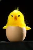 Pulcino del giocattolo nelle coperture dell'uovo immagine stock