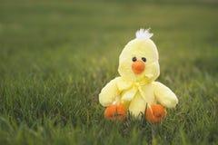Pulcino giallo di Pasqua Immagini Stock Libere da Diritti