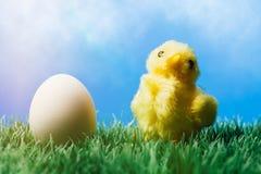 Pulcino giallo su erba e sull'uovo, fondo blu Fotografia Stock
