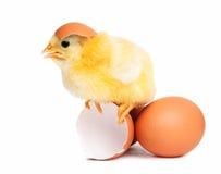 Pulcino sveglio con le uova fotografia stock