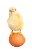 Pulcino sveglio di pasqua con l'uovo immagini stock