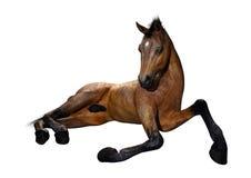 puledro del cavallo della rappresentazione 3D su bianco fotografia stock