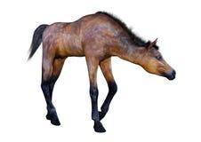 puledro del cavallo della rappresentazione 3D su bianco immagine stock libera da diritti