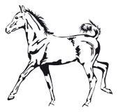 Puledro fiero del cavallo Fotografie Stock