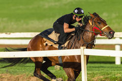 Puleggia tenditrice Closeup Running Track del cavallo da corsa Immagini Stock