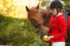 Puleggia tenditrice per alimentare cavallo con la mela Fotografie Stock Libere da Diritti