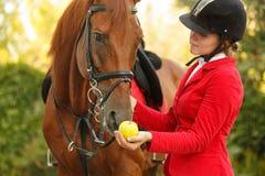Puleggia tenditrice per alimentare cavallo con la mela Fotografie Stock