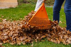 Pulendo le foglie con un rastrello Lavoro di autunno nel giardino fotografia stock