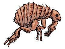 pulga Fotografía de archivo