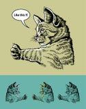 Pulgar encima del ejemplo del gato Imagen de archivo