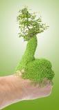 Pulgar verde Foto de archivo libre de regalías