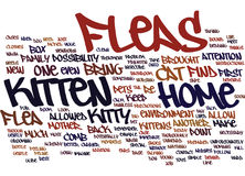 Pulgas y su concepto de Kitten Text Background Word Cloud Imagenes de archivo