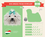 Puli dog breed  infographics Stock Images