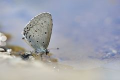Puli glass small gray butterfly in water Royalty Free Stock Photos