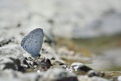 Puli glass small gray butterfly in water Stock Photo