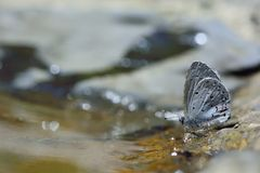 Puli glass small gray butterfly in water Stock Photos