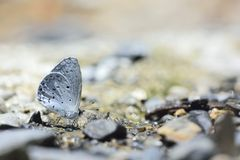 Puli glass small gray butterfly in water Royalty Free Stock Photo