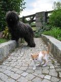 Puli y gatito fotografía de archivo