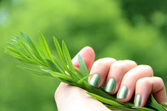 Pulimento de clavo respetuoso del medio ambiente: manicura coloreada menta Imagen de archivo libre de regalías