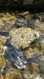 Pulisca i fiumi Salisbury Immagine Stock Libera da Diritti