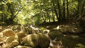 Pulisca il fiume in foresta antica, Romania 2 stock footage