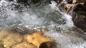 Pulisca il fiume in foresta antica, Romania dettaglio video d archivio