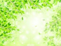 Pulisca le illustrazioni verdi fresche del fondo Immagini Stock Libere da Diritti
