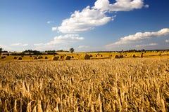 Pulizia dei cereali Immagini Stock