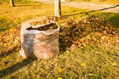 Pulizia del fogliame caduto Fotografia Stock Libera da Diritti