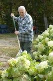 Pulizia del giardino di autunno Immagine Stock Libera da Diritti