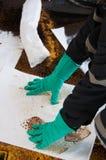 Pulizia di caduta di olio su area di lavoro il pericolo per la natura Immagini Stock Libere da Diritti