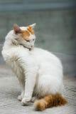 Pulizia in se del gatto fotografia stock