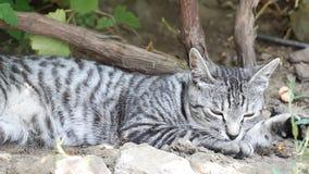 Pulizia in se del gatto archivi video
