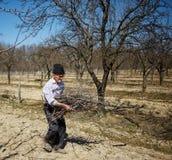 Pulizie di primavera senior dell'agricoltore il frutteto Fotografia Stock Libera da Diritti