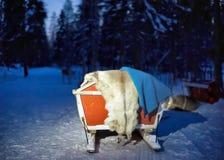 Pulkor i ren brukar i Lapland Finland på natten Royaltyfria Foton