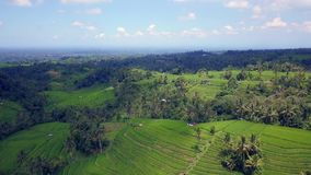 Pull back aerial shot revealing the beautiful pattern of Bali rice terraces and jungle stock video footage