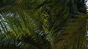Pull back from breeze blowing palm tree stock video footage