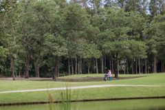 Pulling caddies across the golf course. royalty free stock photos